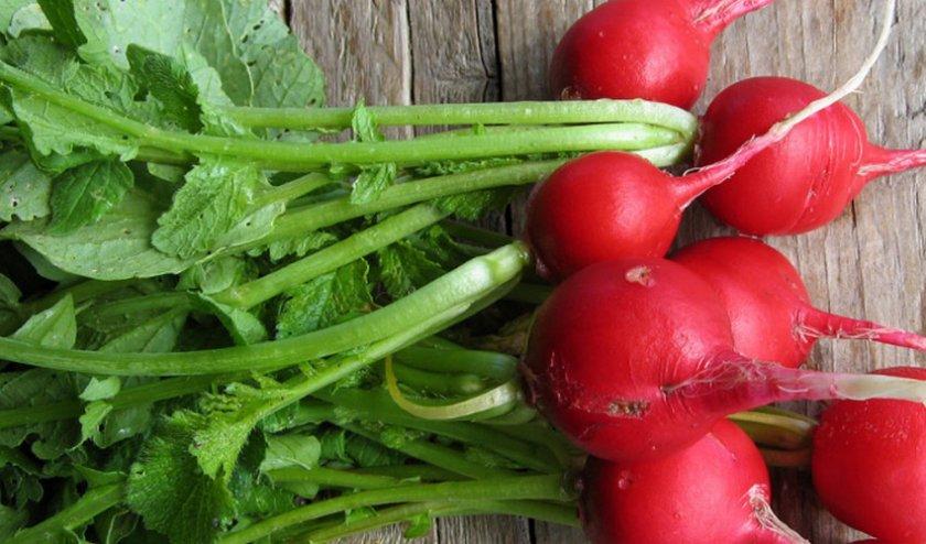 Чем полезна редиска и с какого возраста весенний овощ можно давать ребенку? как правильно ввести в рацион?
