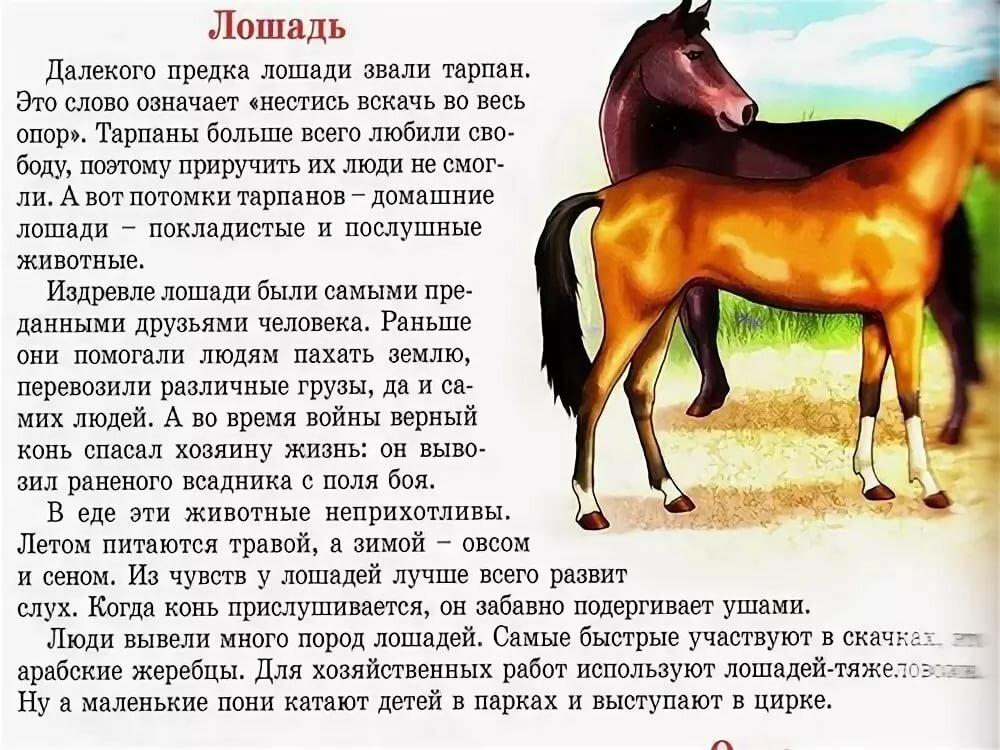 Дикие лошади: описание, породы, где живут