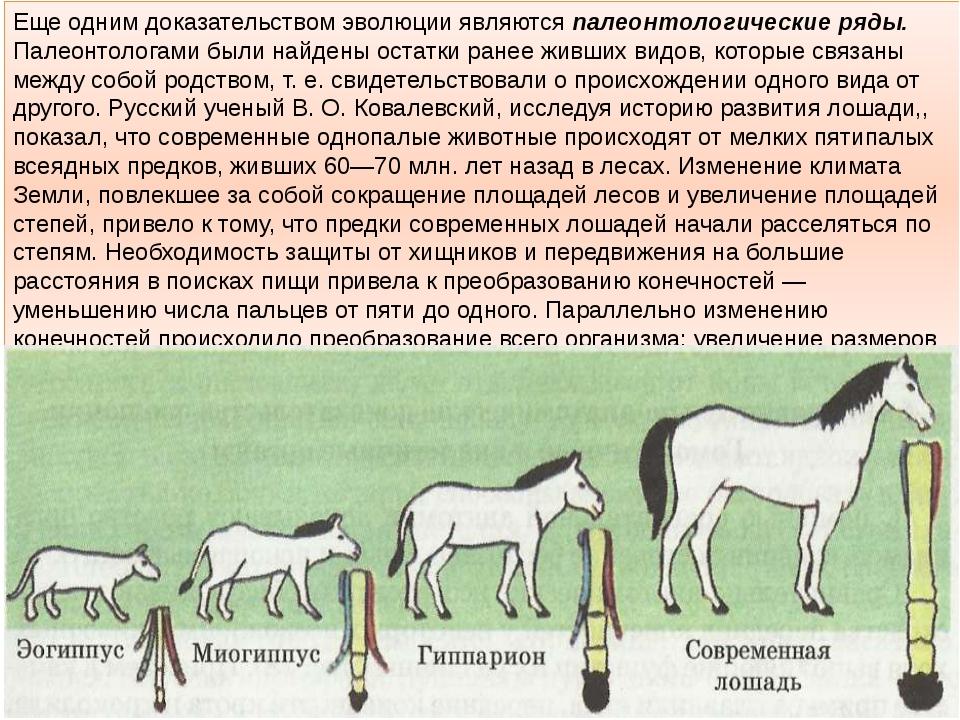 Иппология - наука, которая изучает анатомию, биологию размножения и породообразование лошадей