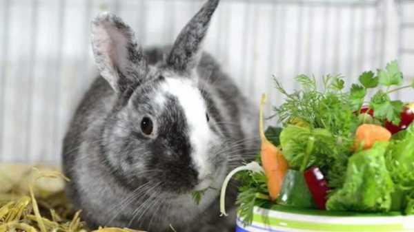 Можно ли давать кроликам огурцы и в каких количествах?