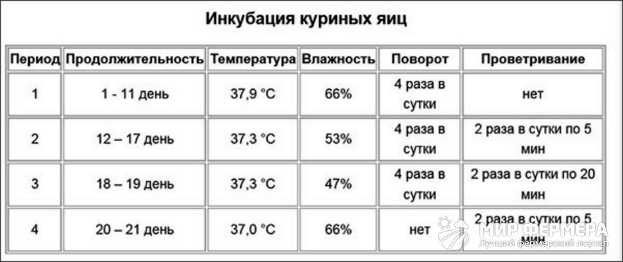 Как выращивать и что делать с вылупившимися гусятами - 7kyr.ru