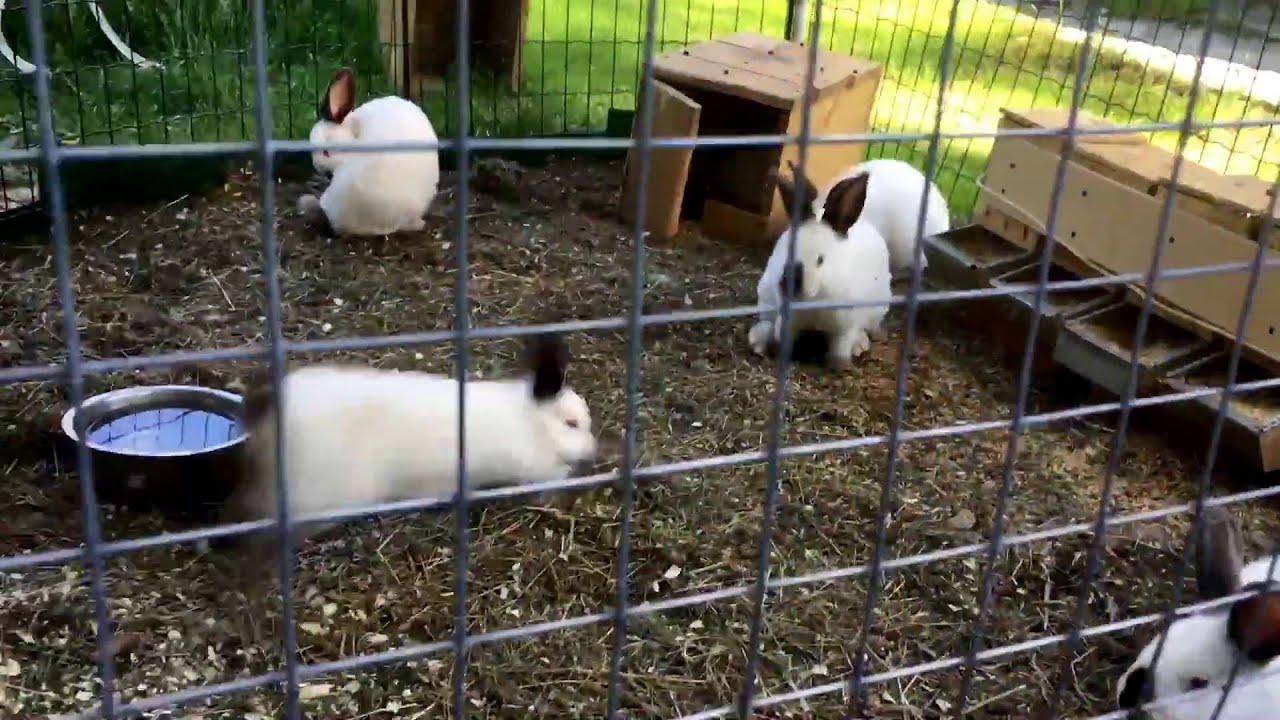 Вольер для кроликов: содержание и разведение для начинающих