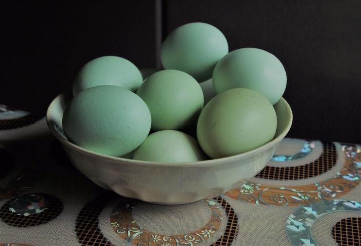 Синь синь дянь порода кур – описание, содержание, фото и видео