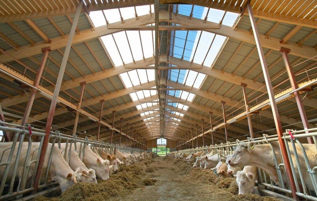 Коровник (55 фото): нормы строительства, как обустроить стойло для коров, размер сарая на 5 голов, схема проекта