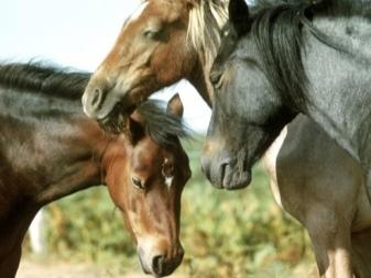 Как спят лошади: лежа или стоя и почему