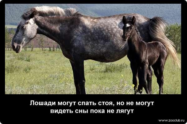 Лошадь пржевальского (46 фото): почему так назвали коней и где они обитают? краткое описание и интересные факты. парнокопытные они или нет? как выглядит подвид дикой лошади?