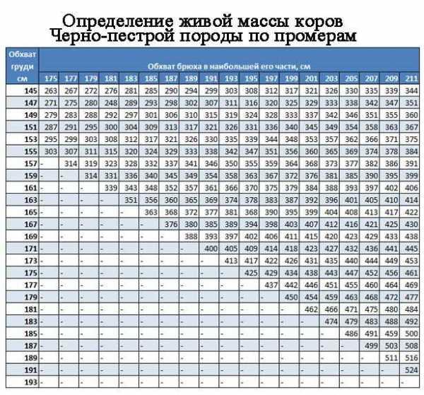 Измерение веса крупного рогатого скота