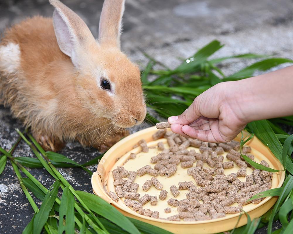 Что ест декоративный кролик в домашних условиях: виды кормов