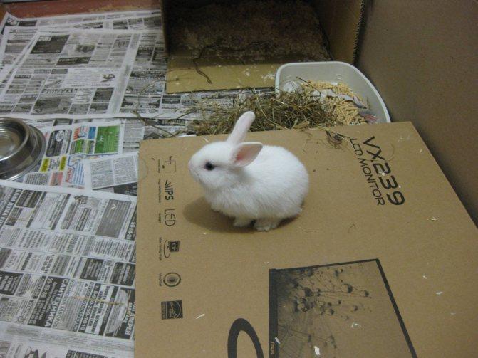 Почему кролик грызет клетку: что делать и опасно ли это