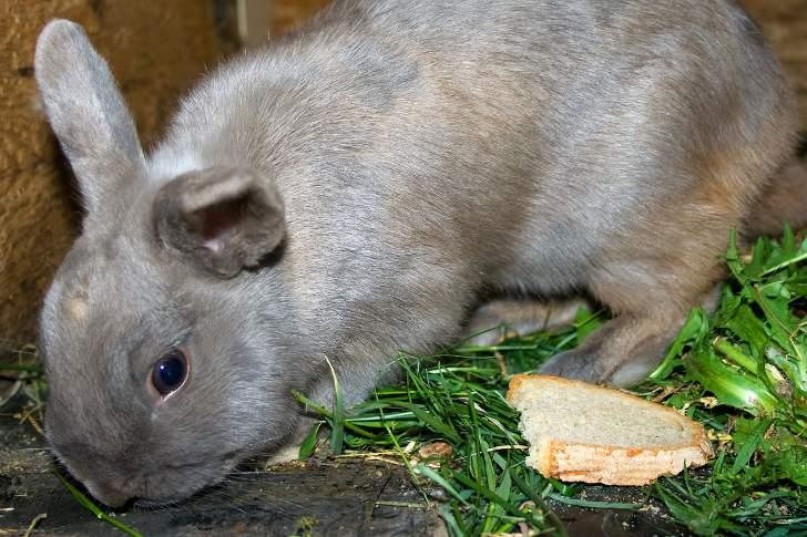 Можно ли кроликам петрушку: рекомендации специалиста