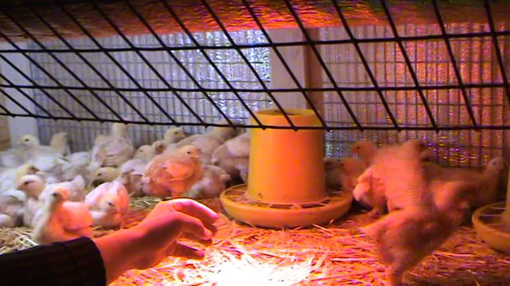 Как сделать комбикорм для бройлеров цыплят своими руками