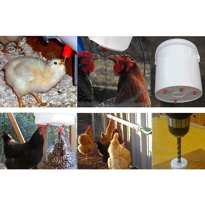 Как правильно сделать поилку для цыплят своими руками