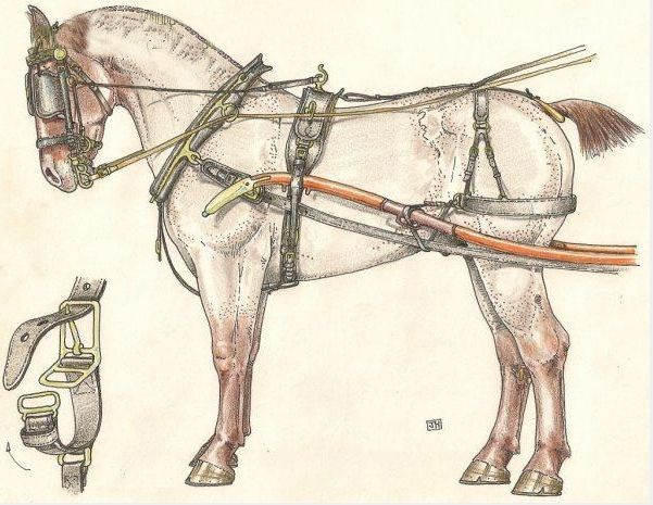 Все о конной сбруе: история возникновения, виды, основные части конской упряжи