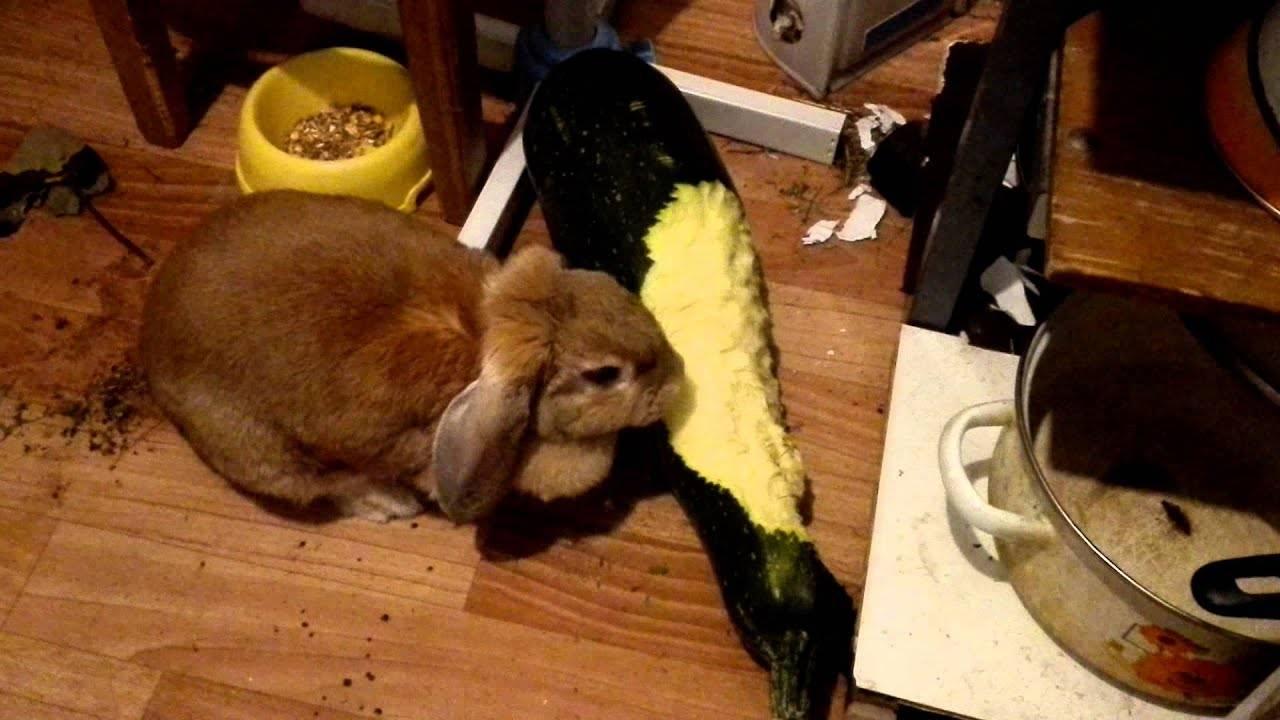 Можно ли кроликам давать кабачок и тыкву?