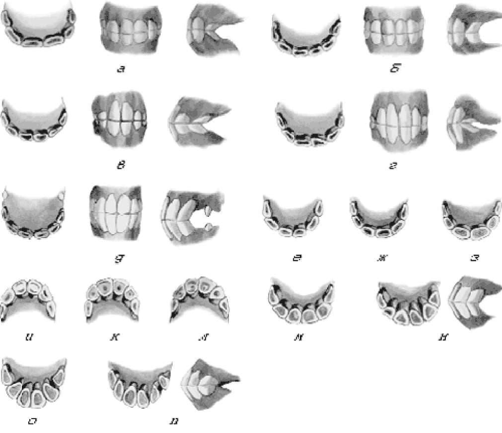 Зубы лошади: виды, строение и особенности. определение возраста лошади по зубам