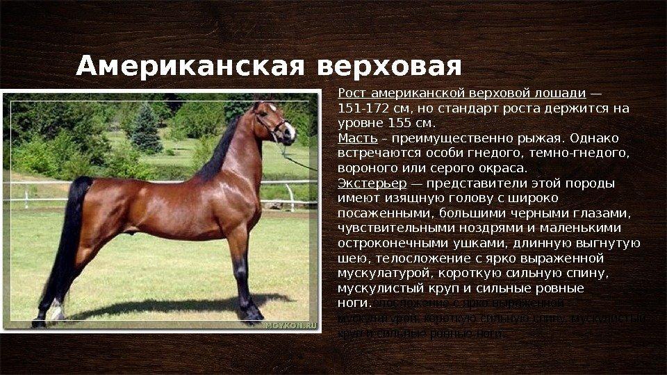 Лошадь: описание, виды, особенности, характеристика