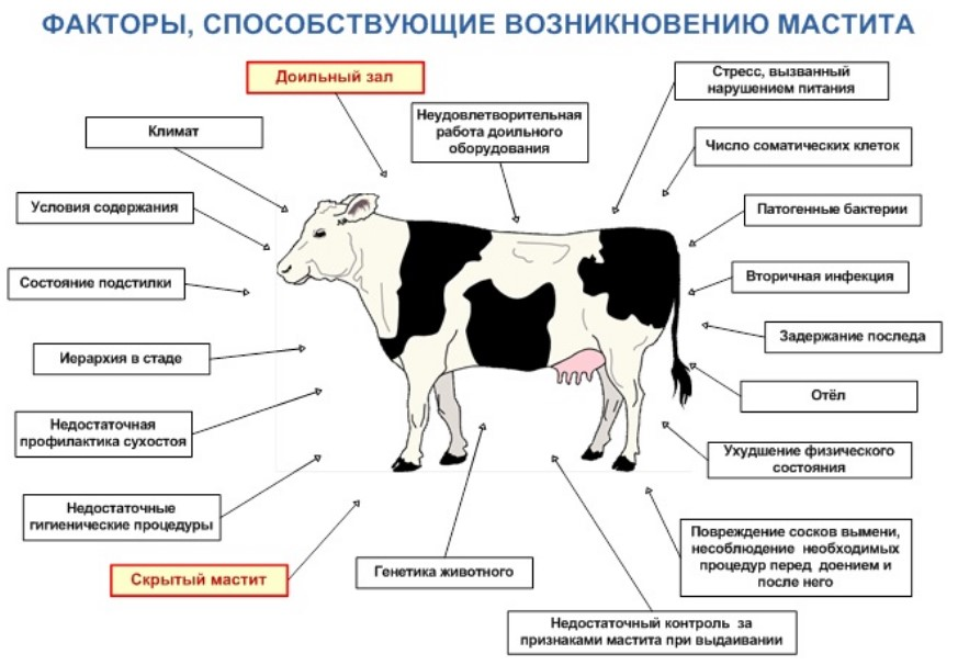 Болезнь лошадей — инфекционная анемия