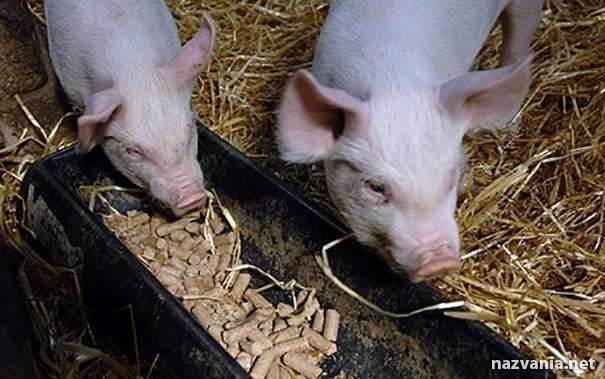 Как сделать комбикорм для свиней и поросят и как правильно подобрать состав