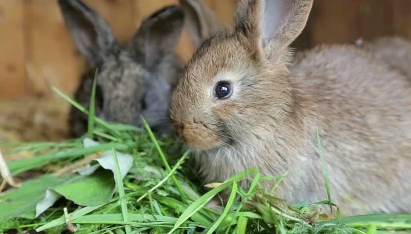 Чем нельзя кормить кроликов - рекомендации, рацион, продукты