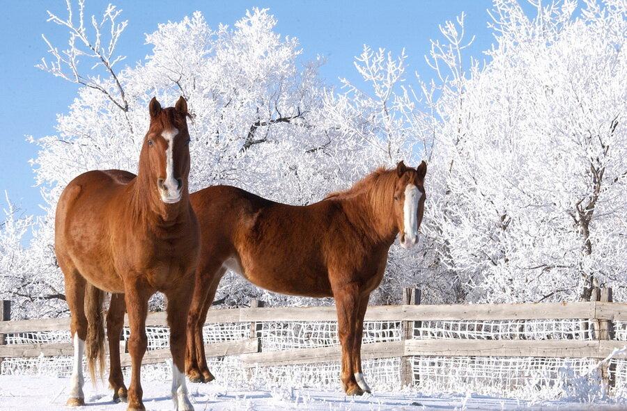 Все о лошадях: интересные факты