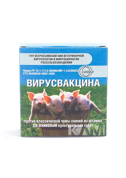 Чума свиней: опасность заболевания, методы лечения и профилактики, первая симптоматика