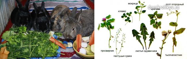 Какую траву можно давать кроликам