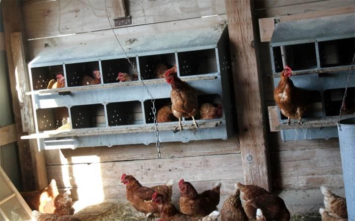 Гнездо для кур несушек своими руками: чертежи и пошаговая инструкция по изготовлению!
