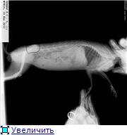 Почему у кролика отказали лапы (задние, передние): причины, симптомы, что делать и как лечить