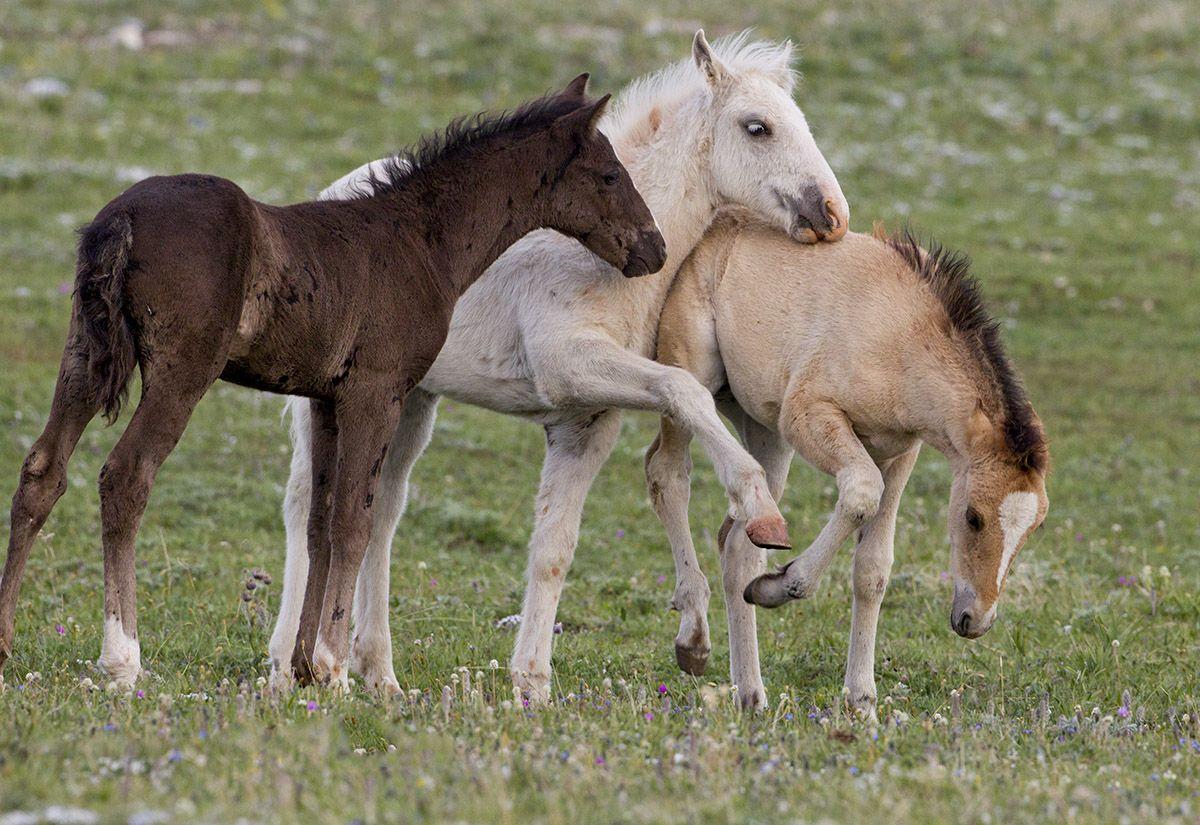 Разведение и уход за лошадью в домашних условиях