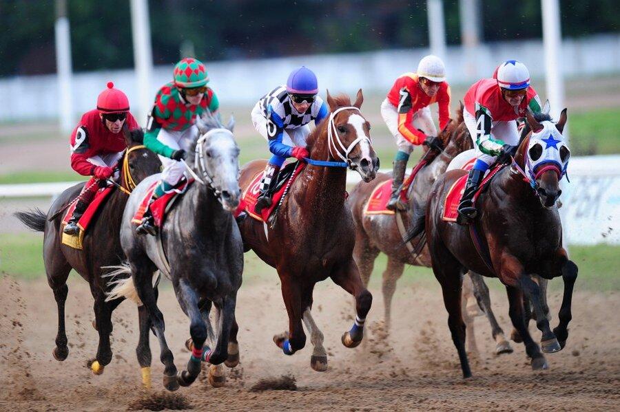 Скачки на лошадях – особый вид тренировки коней 2020