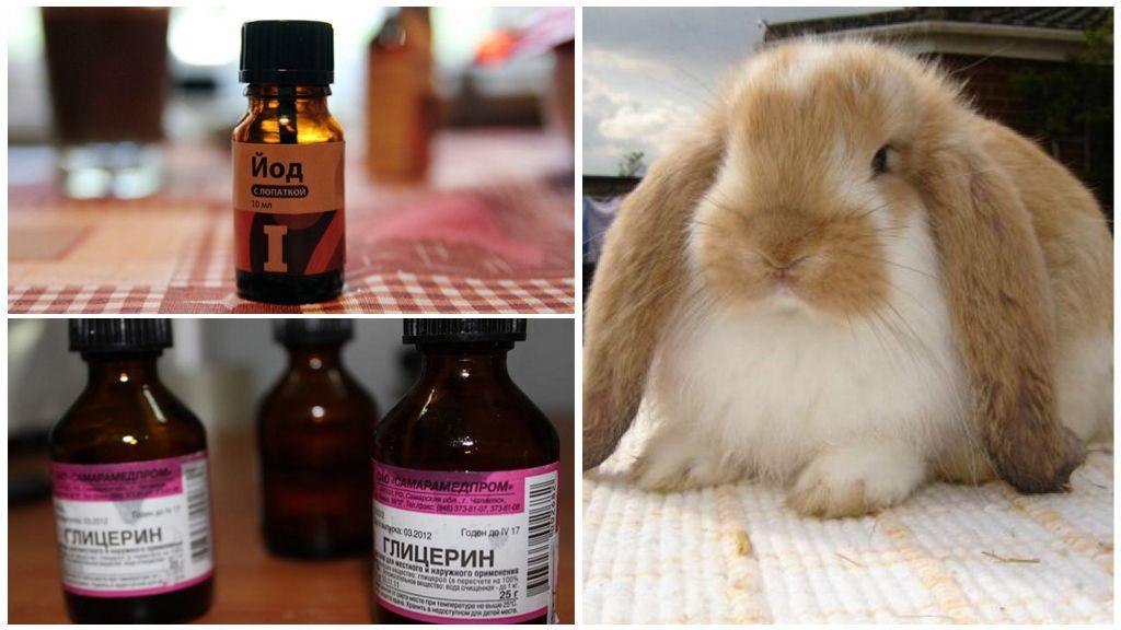 Лечение ушного клеща у кроликов и профилактика болезней кроликов в домашних условиях