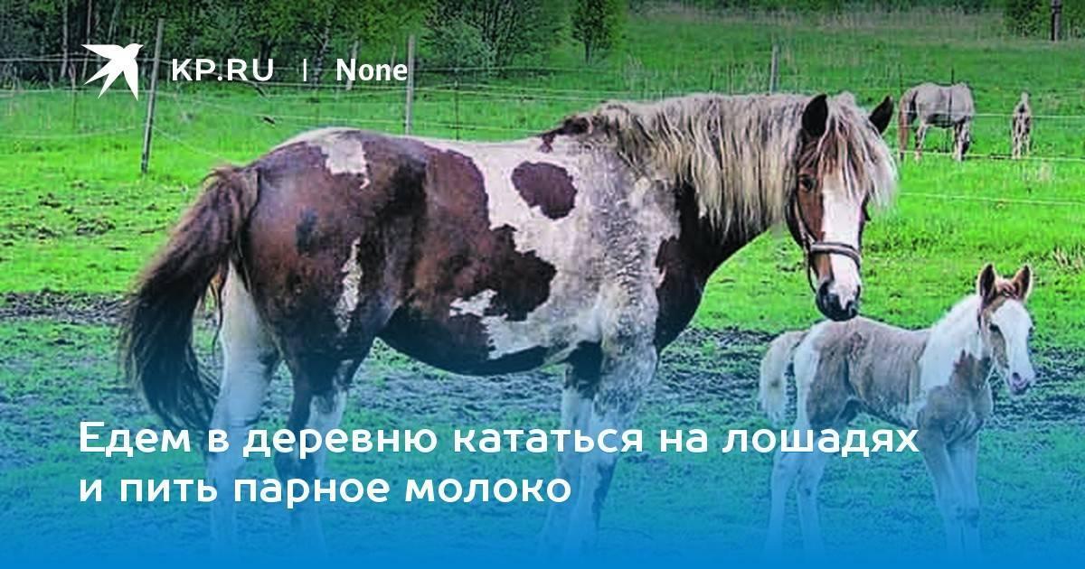 Золотой запас россии – лошади-буденновцы