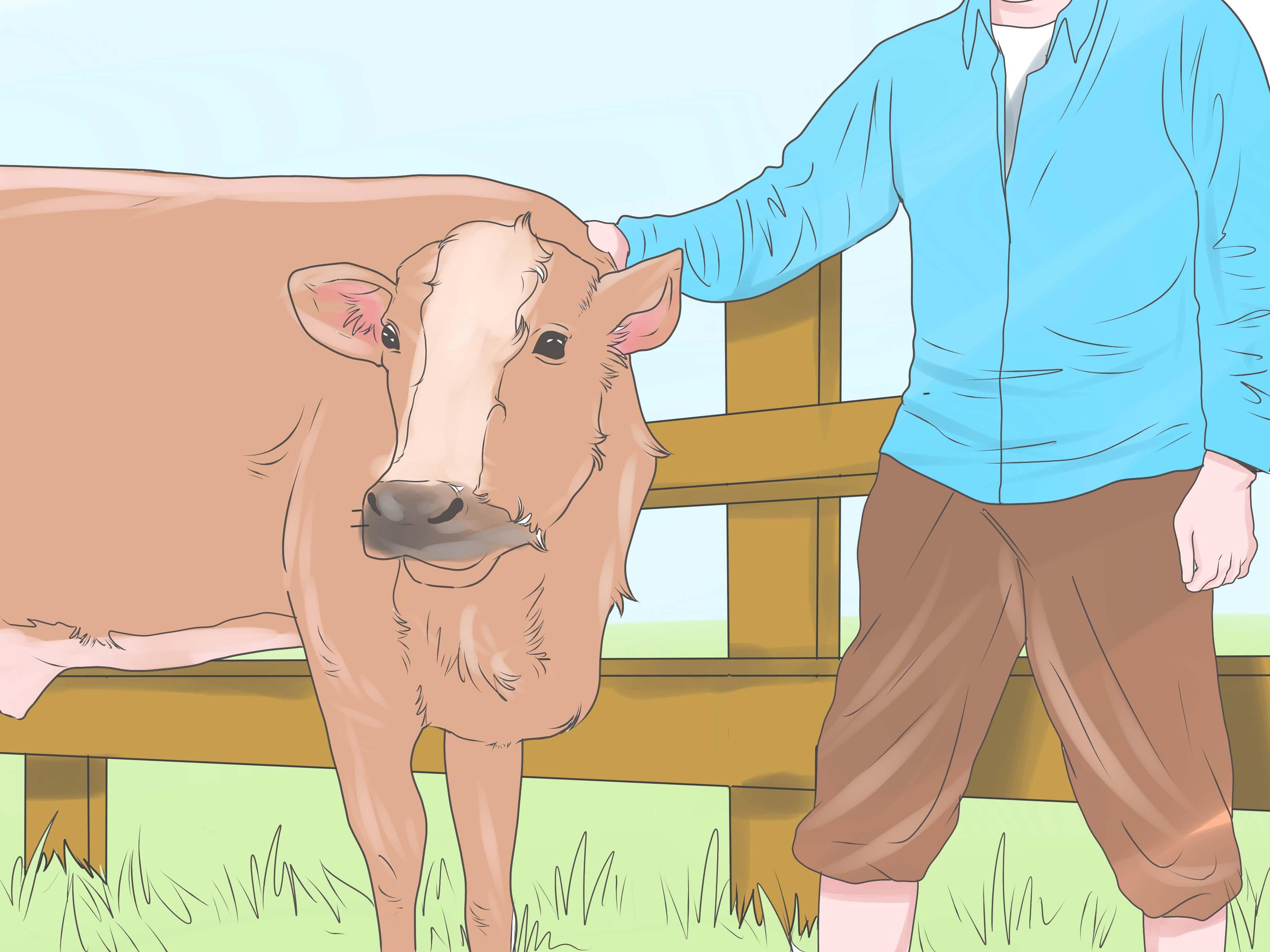 Кастрация козлят и взрослых козлов – техника, показания