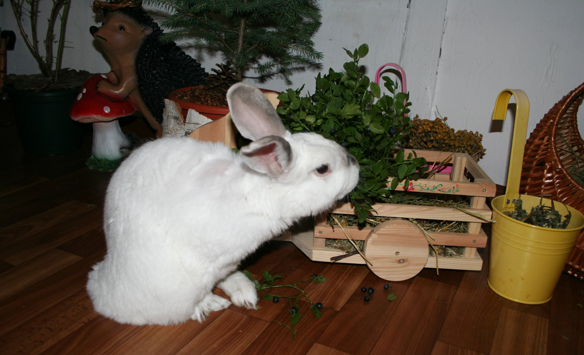Обучаем декоративного кролика различным командам