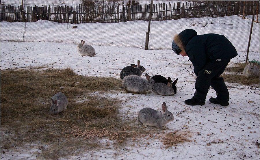 ᐉ чем кормить кроликов, чтобы они набирали вес - zooon.ru