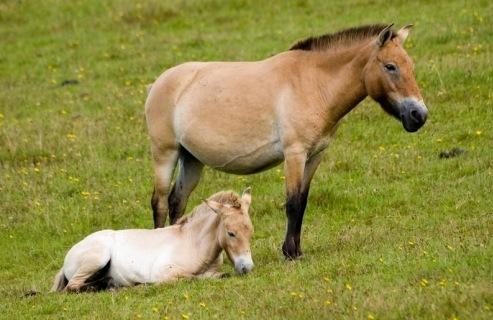 Значение лошади в жизни человека – описание, фото и видео