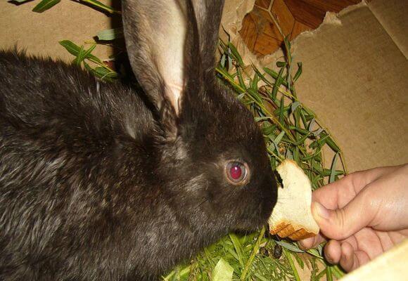 Можно ли кроликам отруби: в чём польза, как их давать