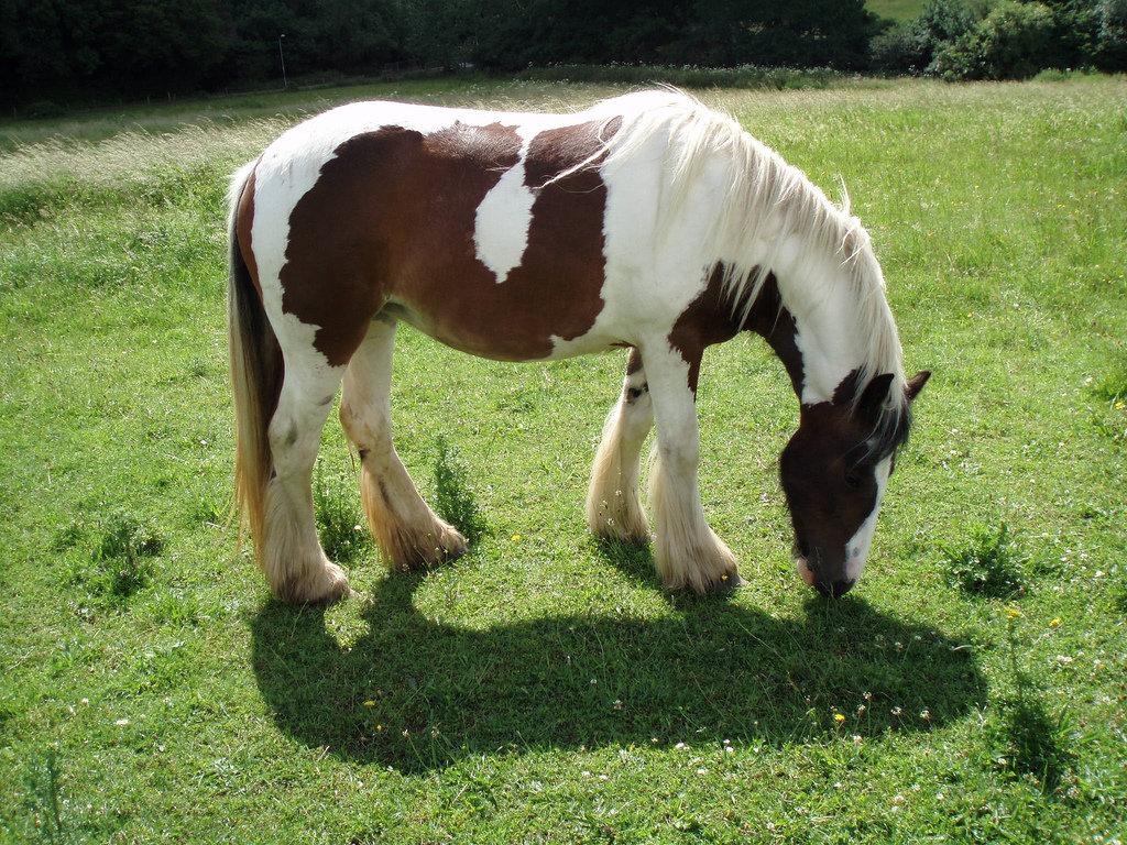 Обзор всех лошадиных мастей