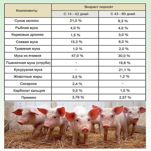 Чем кормить поросят от 1 до 6 месяцев?