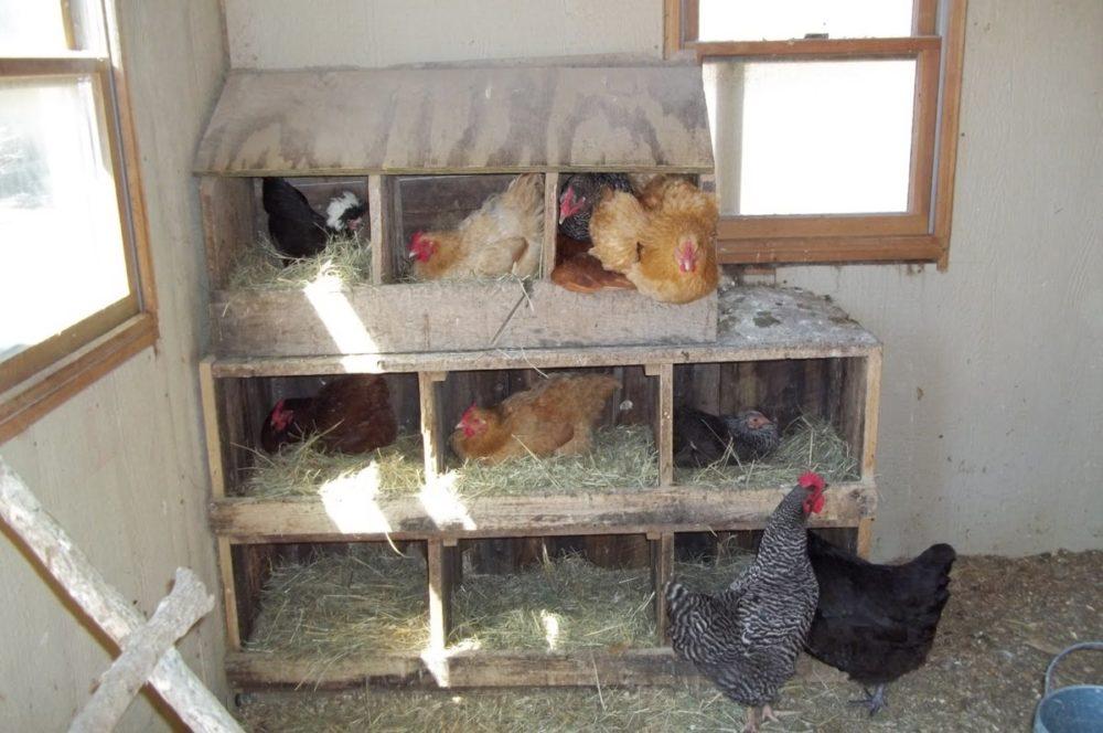 Сколько гнезд нужно для 10 кур. как сделать гнезда для несушек своими руками