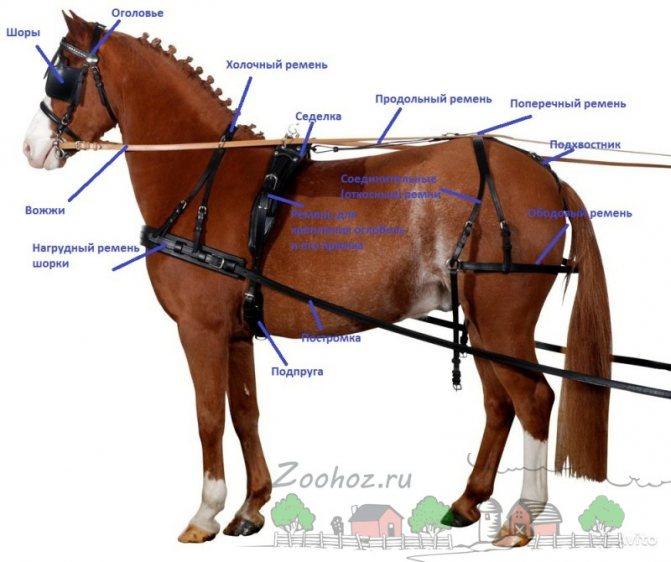 Как запрячь коня самостоятельно: подробная пошаговая инструкция