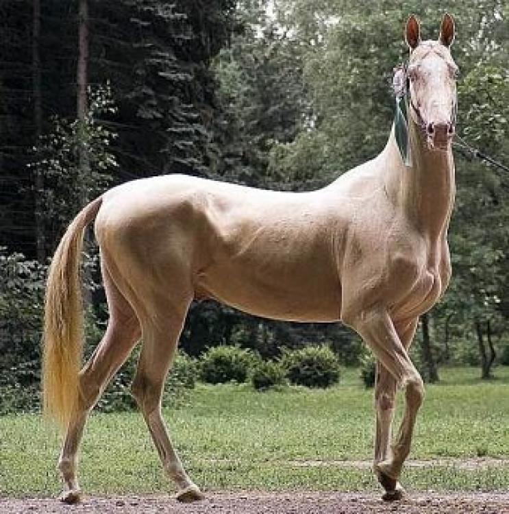 Необычные лошади