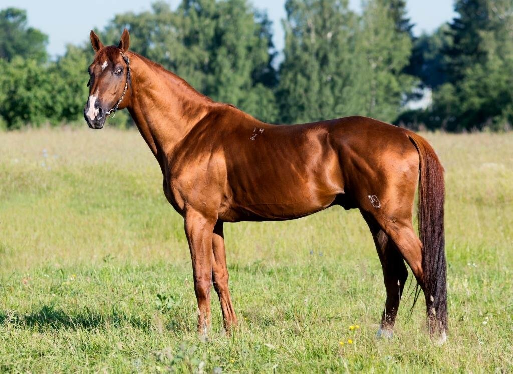 Донская и буденновская порода лошадей в спорте: исследование за 2019 год — agroxxi