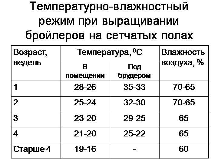 Температурный режим содержания для бройлеров разного возраста