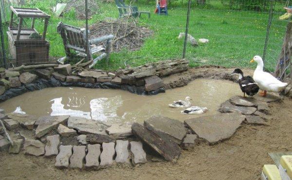 Организация водоема для уток и гусей на своем участке