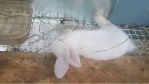 Причины гибели кроликов летом, профилактика