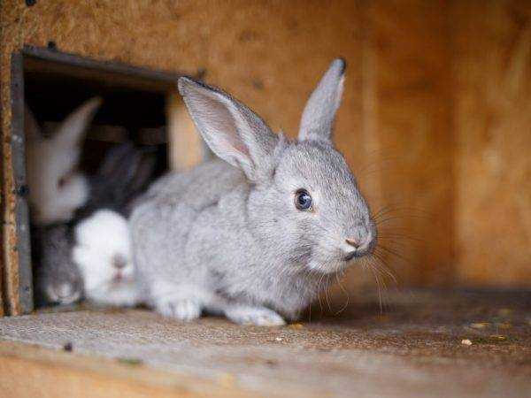 Что делать если, кролик грызет клетку