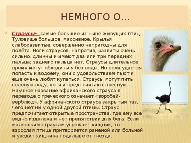 ✅ эму страус австралийский: описание и характеристика (фото и картинки) - среда обитания - особенности - tehnoyug.com