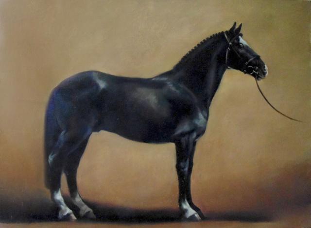 Масти лошадей: вороной конь и его особенности