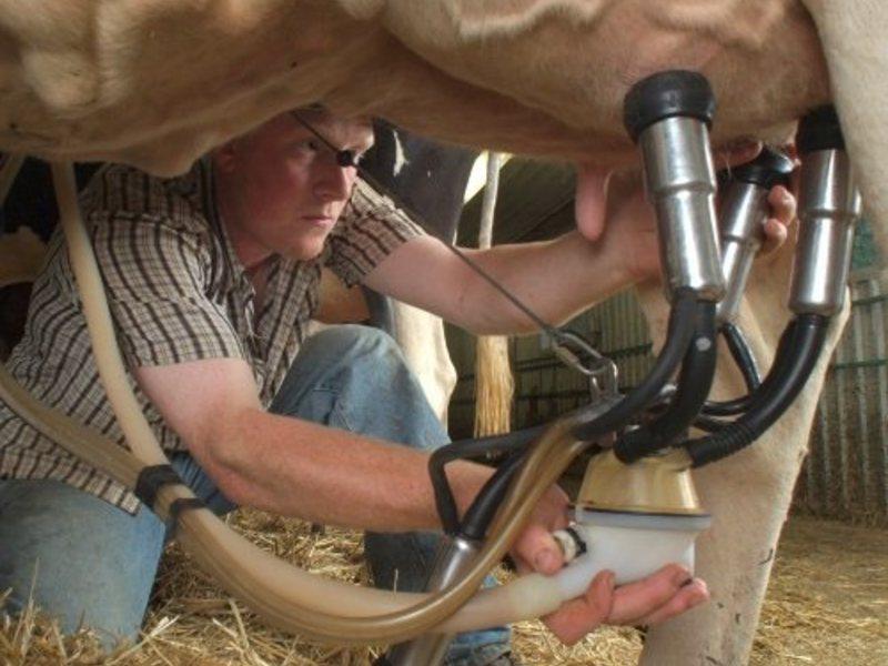 Доильный аппарат для коров: основные виды, описание и принцип работы